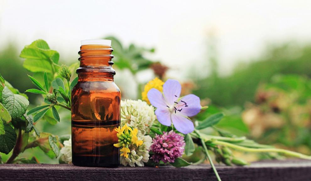 phytotherapie-volle-pflanzenkraft